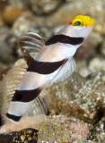 Ambon2012-21