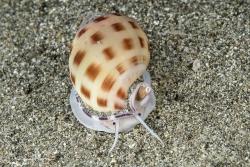 Ball Helmet Shell