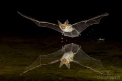 Bats2014-1