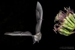 Bats2014-11