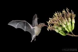 Bats2014-12