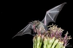 Bats2014-13
