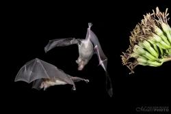 Bats2014-16