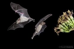 Bats2014-17