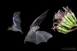Bats2014-18