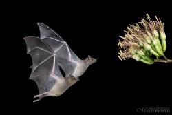 Bats2014-19