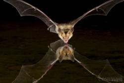 Bats2014-2