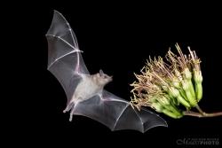 Bats2014-21