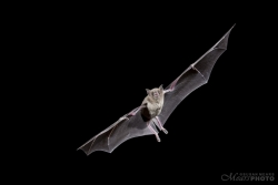 Bats2014-22