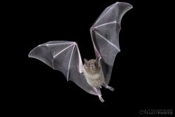Bats2014-23