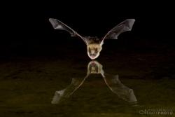 Bats2014-5