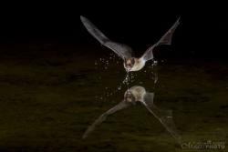 Bats2014-6