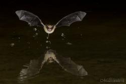 Bats2014-7