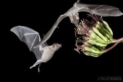 Bats2014-8