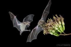 Bats2014-14