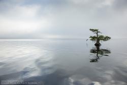 BLUE CYPRESS LAKE