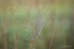 FOGGY MORNING SPIDER WEB