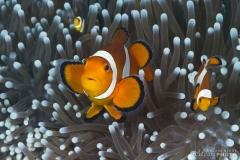 Philippines2011-2