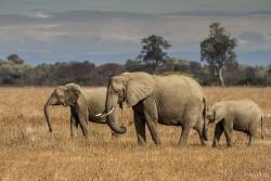 ZambiaAfrica-3
