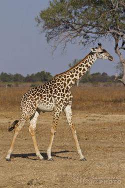 ZambiaAfrica-33