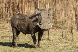 ZambiaAfrica-39
