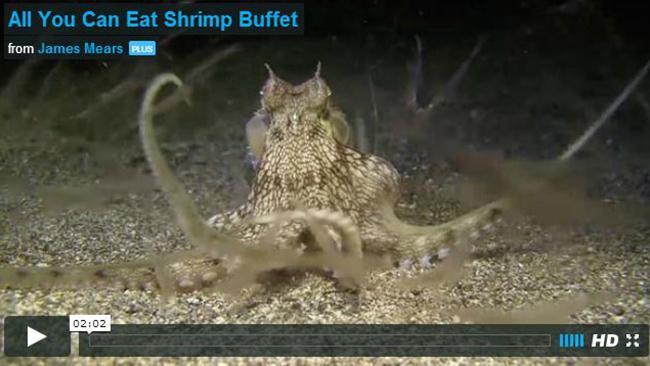 ShrimpBuffet.jpg