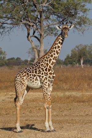 Africa2011-228.jpg