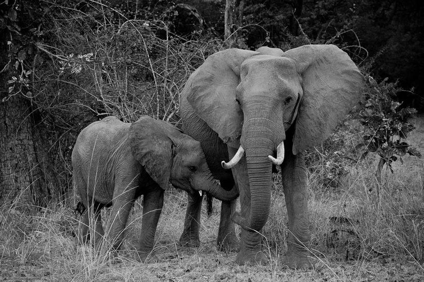Africa2011-101.jpg